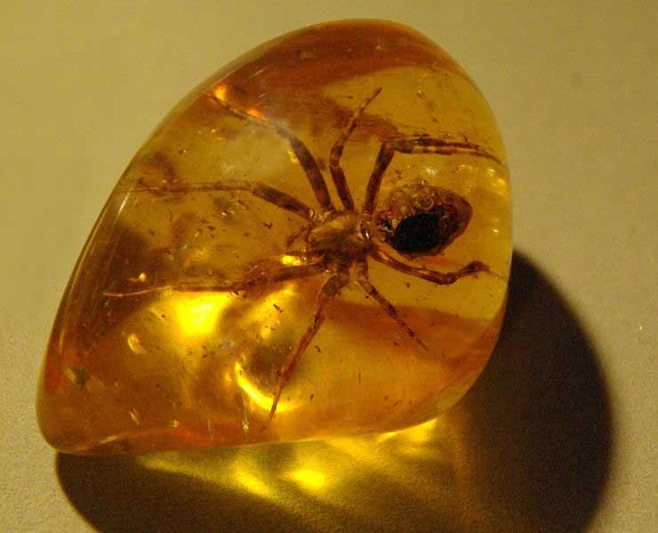 فسیل زیبای عنکبوت در کهربا