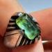 عکس ریز انگشتر قدیمی مردانه زمرد f498.3